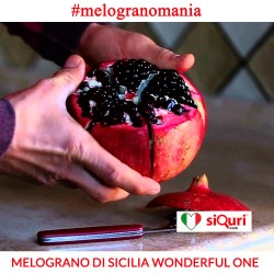 Melograno di Sicilia Wonderful - cassette da 4,7 Kg